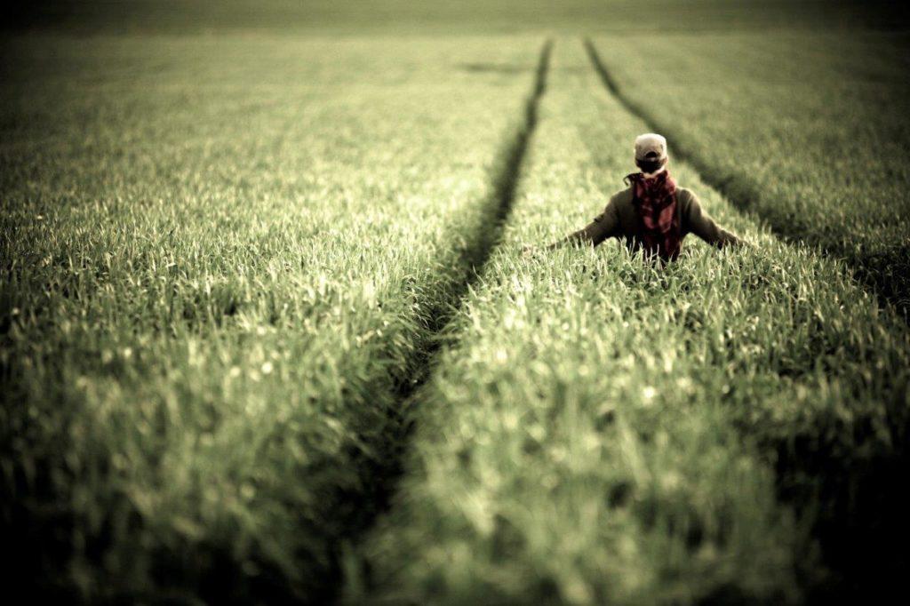 homme champs blés