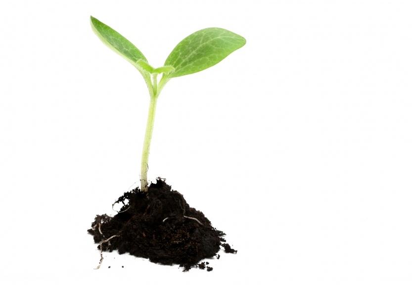 plant-poussant