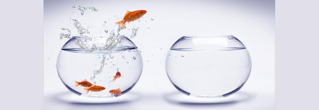 Développement des potentiels individuels par le coaching systémique