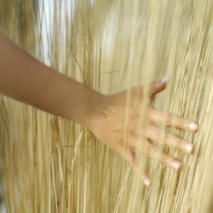 Lady's hand sweeping through grasses