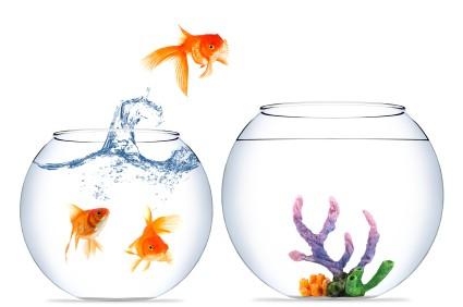 Résistance au changement en entreprise : Dirigeants, changez de logiciel interne ! 1/2