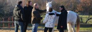 horse coaching séminaire de cohésion d'équipe