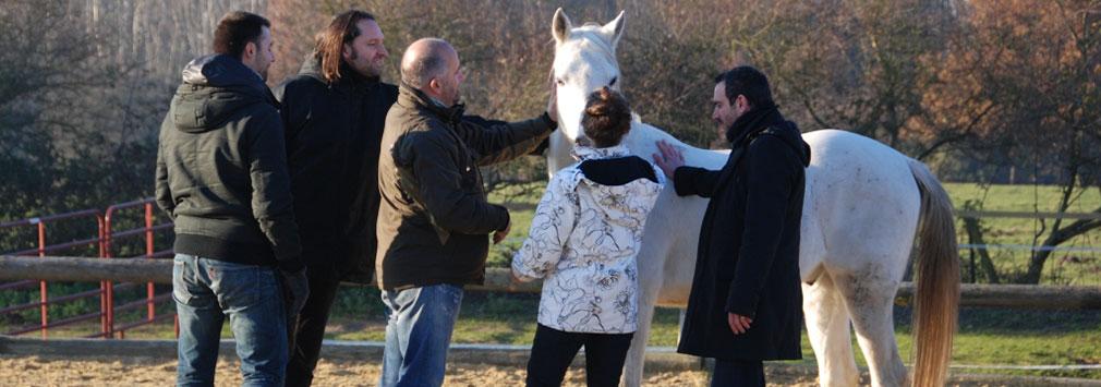 Séminaire de cohésion d'équipe et de team building innovant: le horse coaching ou la motivation par le cheval.